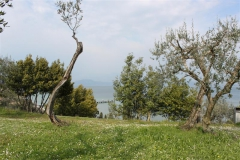 verona2010-066
