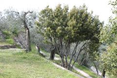 verona2010-069
